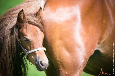 foals paradiziak 72-2089