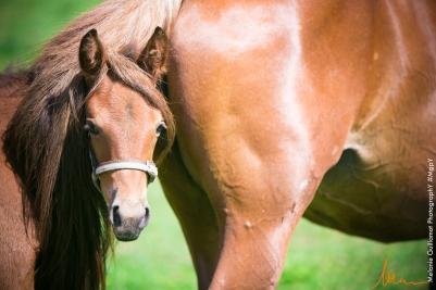 foals paradiziak 72-2090