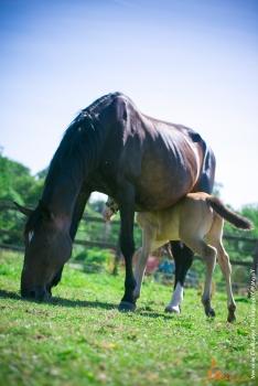 foals paradiziak 72-2236