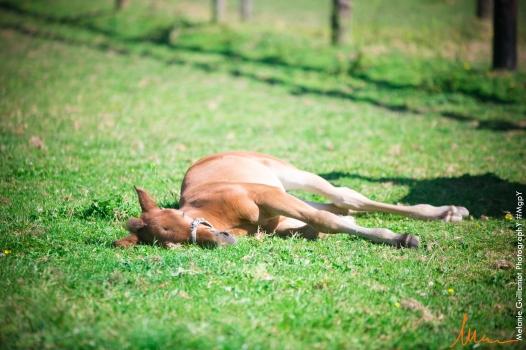 foals paradiziak 72-2246