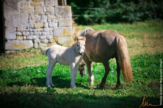 foals paradiziak 72-2298
