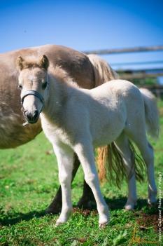 foals paradiziak 72-2318