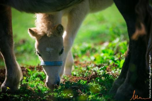foals paradiziak 72-2336