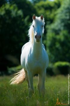 foals paradiziak 72-2458
