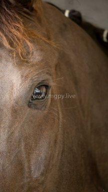 Attitudes chevaux IFCE-5918