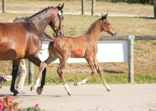 Foal 01 HDP régional 2020-019116