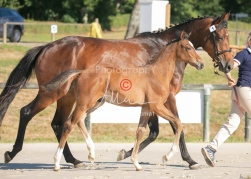 Foal 01 HDP régional 2020-019133
