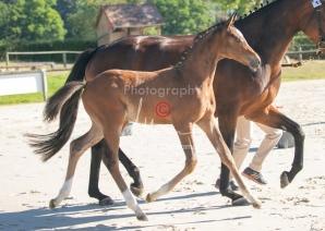 Foal 01 HDP régional 2020-019141