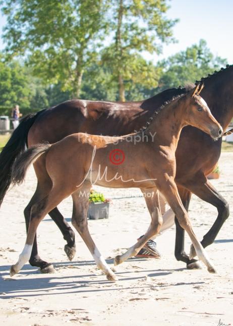 Foal 01 HDP régional 2020-019142