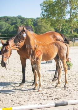 Foal 02 HDP régional 2020-029159