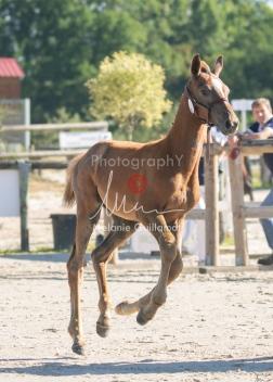 Foal 02 HDP régional 2020-029168