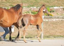 Foal 02 HDP régional 2020-029173