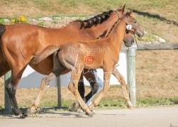 Foal 02 HDP régional 2020-029174