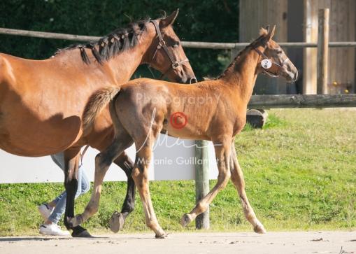 Foal 02 HDP régional 2020-029182