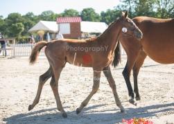 Foal 02 HDP régional 2020-029199