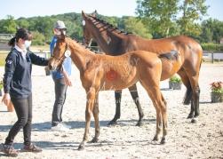 Foal 03 HDP régional 2020-039303