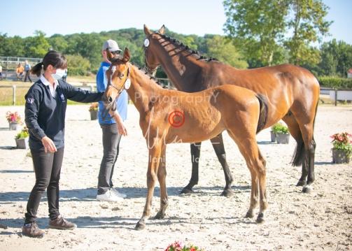 Foal 03 HDP régional 2020-039305