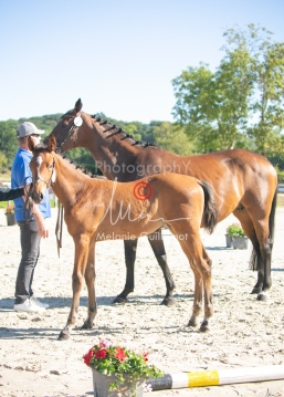 Foal 03 HDP régional 2020-039308