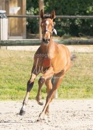Foal 03 HDP régional 2020-039314