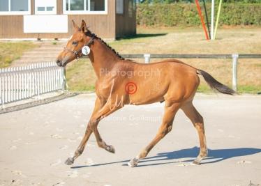 Foal 03 HDP régional 2020-039319