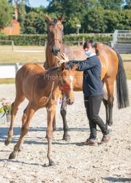 Foal 03 HDP régional 2020-039322