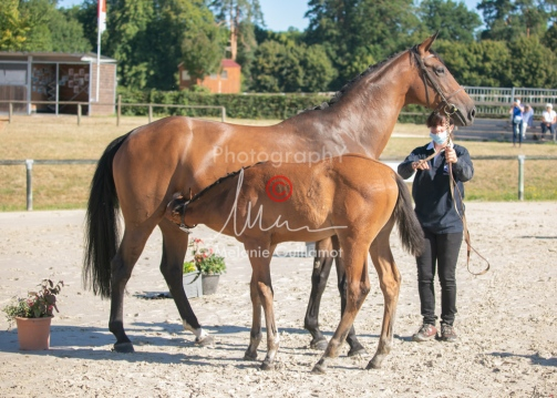 Foal 03 HDP régional 2020-039325