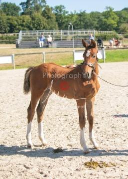 Foal 04 HDP régional 2020-049387