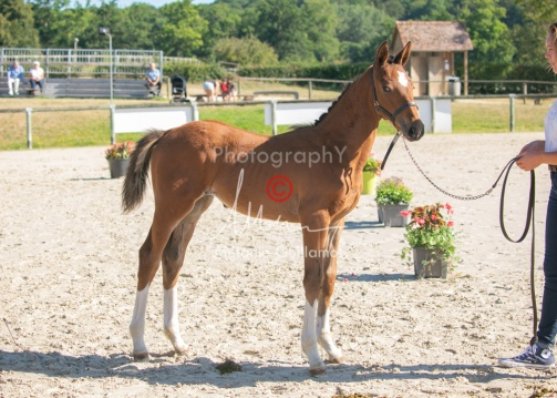 Foal 04 HDP régional 2020-049389