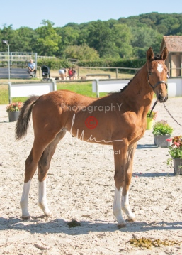 Foal 04 HDP régional 2020-049390