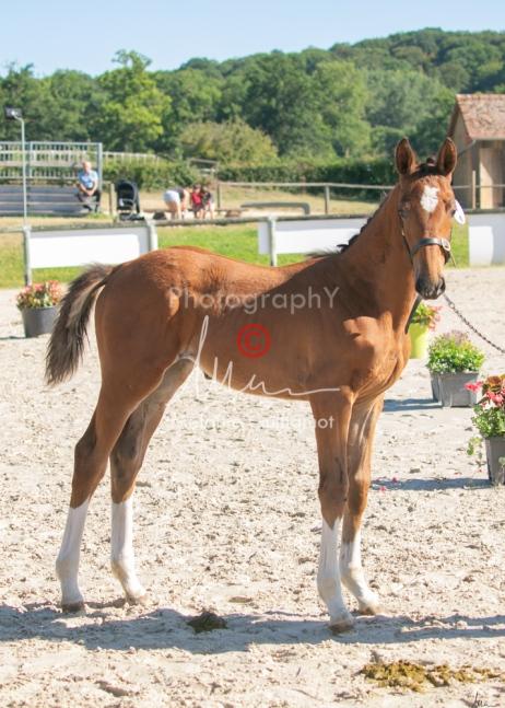 Foal 04 HDP régional 2020-049391