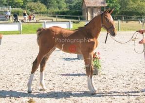 Foal 04 HDP régional 2020-049394
