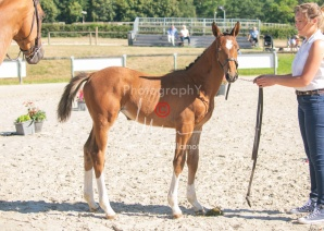 Foal 04 HDP régional 2020-049401