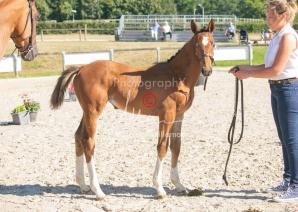Foal 04 HDP régional 2020-049402