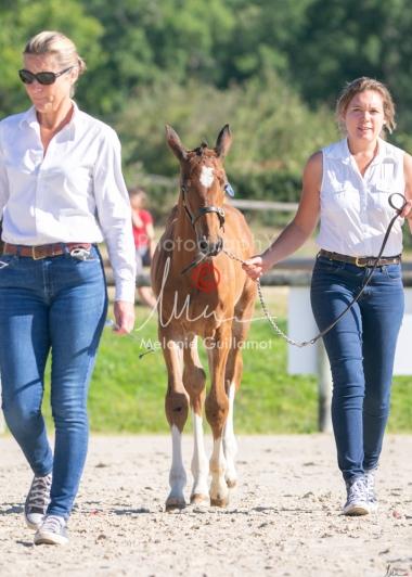 Foal 04 HDP régional 2020-049404