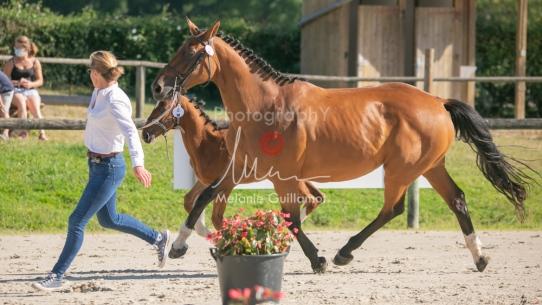 Foal 04 HDP régional 2020-049411