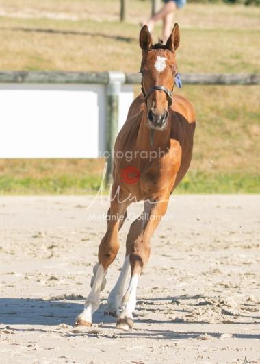Foal 04 HDP régional 2020-049413-2