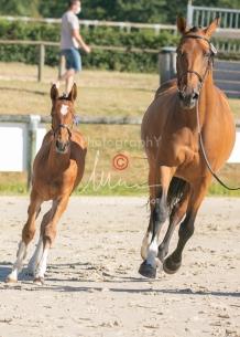 Foal 04 HDP régional 2020-049413