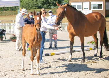 Foal 04 HDP régional 2020-049433