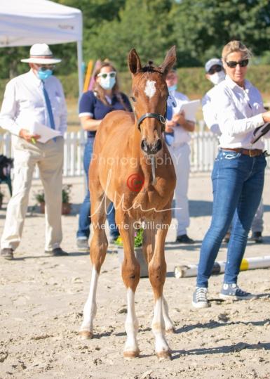 Foal 04 HDP régional 2020-049435