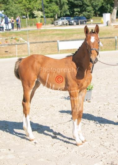 Foal 04 HDP régional 2020-049440