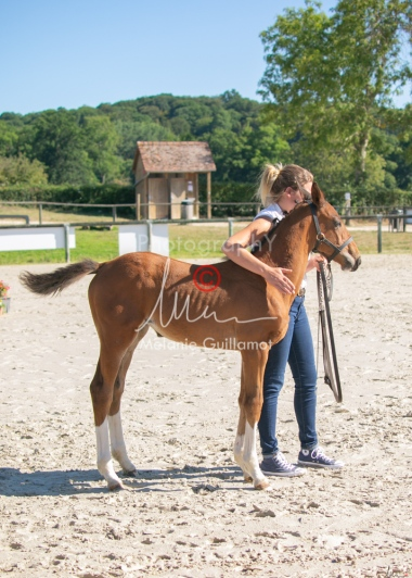 Foal 04 HDP régional 2020-049443