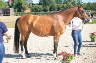 Foal 04 HDP régional 2020-049459