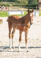 Foal 04 HDP régional 2020-049467