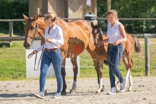 Foal 04 HDP régional 2020-099375