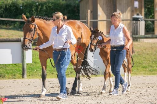Foal 04 HDP régional 2020-099376