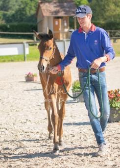 Foal 05 HDP régional 2020-029213