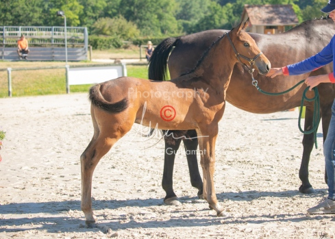 Foal 05 HDP régional 2020-059222