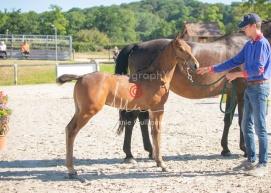 Foal 05 HDP régional 2020-059223