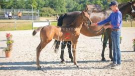 Foal 05 HDP régional 2020-059224