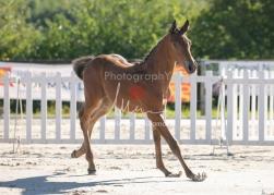 Foal 05 HDP régional 2020-059250